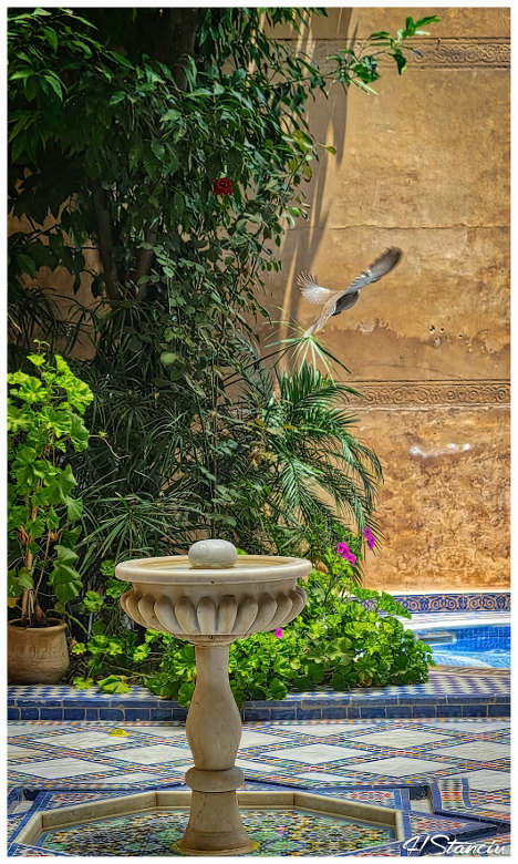 fontaine-riad-layalina-fes